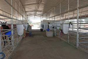 Terms Photo of the inside of a barn showing feeders and stables.