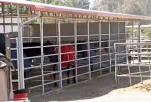 Steel Frame Buildings Horse Port to protect Horses from the Elements